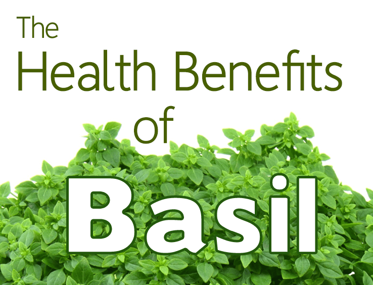 Medicinal Uses and Health Benefits of Basil