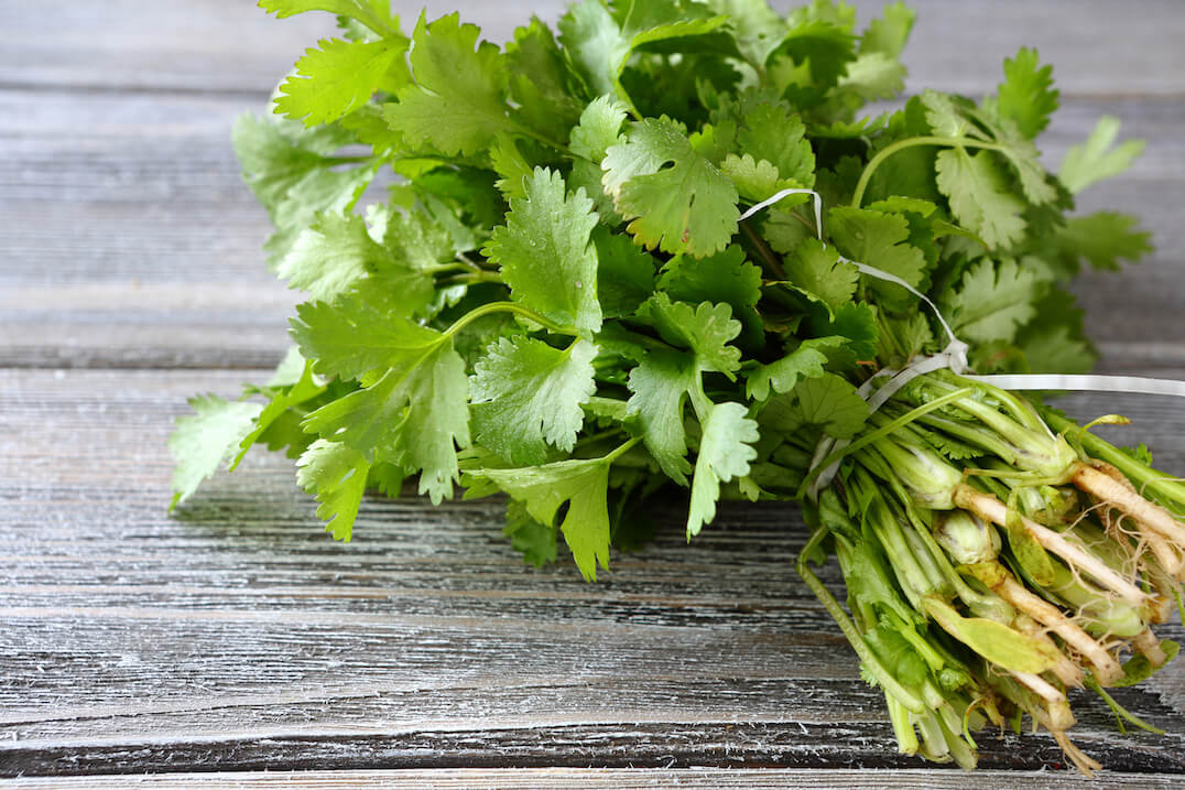 Uses And Health Benefits Of Cilantro