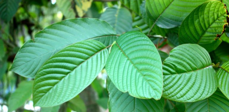 What are the Benefits of Kratom?