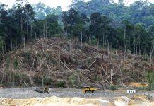 deforestation in borneo