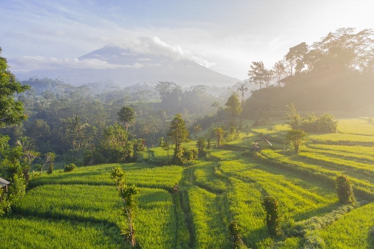 Rehab Bali